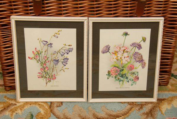 Vintage Botanical Prints, Vintage Botanical Flora Harebell & Soapwart Boots Mid Century Framed Prints Wall Decor